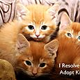 Day 118 - I Resolve To® . . . Adopt Kittens! (2010)