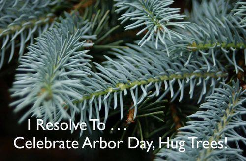 Day 114 - I Resolve To™. . . Hug My Trees!